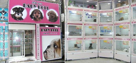 shibuya muryo annaisho baby doll pet shop dougenzaka